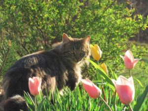 cat in tulips
