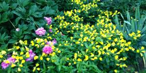 amillionflowers